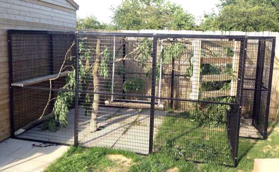 large outdoor parrot cage