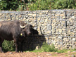 retaining wall and buffalo